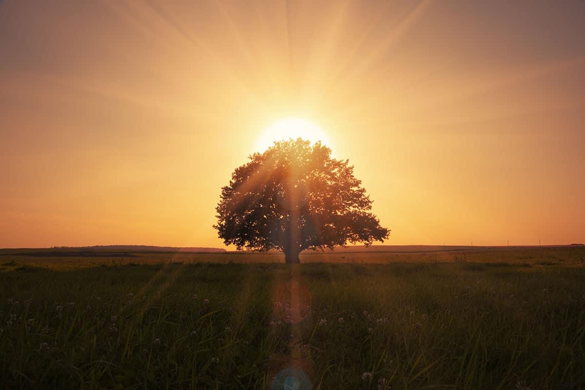 img_fullness_all_things_tree